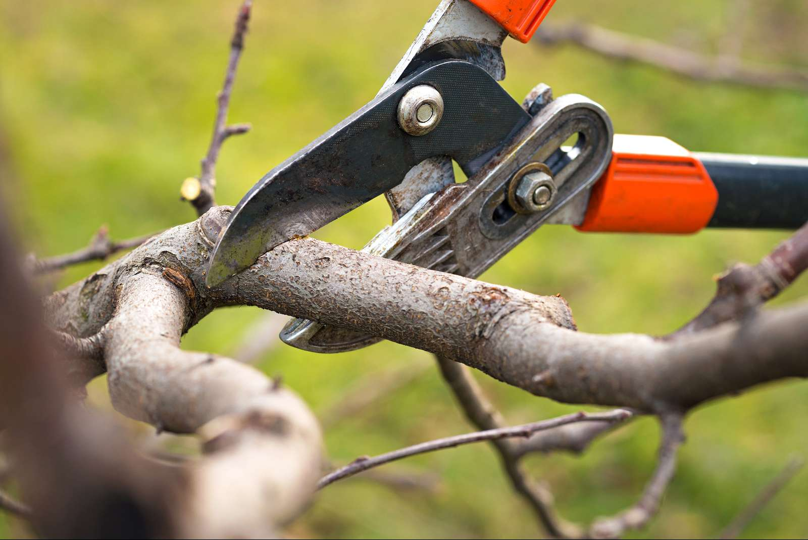 Turn to Us for Meticulous Tree Service
